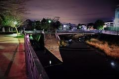 (Human-Faced Bun & Honey Pudding) Tags: night shot light river bridge tree stairs steps dark sky building rock promenade