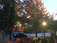 2018 YIP Day 295: Afternoon light (knoopie) Tags: 2018 october iphone picturemail autumn fall redmond 2018yip project365 365project 2018365 yiipday295 day295