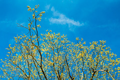 Spring Walk 6 (Walter Quirtmair) Tags: ifttt 500px spring austria quirtmair walk tree shoot green sky blue