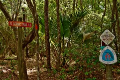 Florida Trail Signs (surfcaster9) Tags: woods nature trail florida outdoors signs lumixg7 20mmf17 trees palm