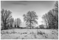 Perfect tree (marc.demeuleneire) Tags: tree landscape bw winter snow nature