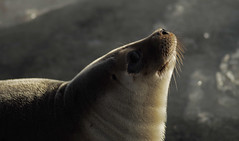 jan18 2019 7 (Delena Jane) Tags: delenajane seal macro 100mm newfoundland ngc canada closeup holyrood pentaxart