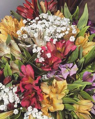 154 (Thaís Letícia Olivo) Tags: flowers flower valentines day valentinesday boyfriend gift colors colorful nature happiness happy