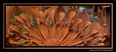 Fleur de fer (Terra Pixelis) Tags: nikond810 fleurs fer rouille