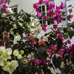 XPro2-2019-0458 (Mark*f) Tags: worthavenue archway bench bougainvilleavines courtyards figs fountain orchids succulents views window
