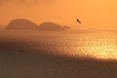 Nascer do sol incrível - Amazing sunrise (adelaidephotos) Tags: nascerdosol sunrise incrível amazing ilhas cagarras islands joá amanhecer dawn sol sun mar sea rio riodejaneiro brazil brasil mariaadelaidesilva laranja orange dourado golden