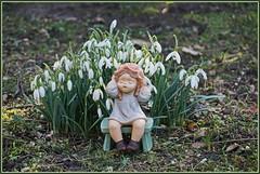 💚 Die Glöckchen sind aufgewacht, sie läuten so laut 💚 (Kindergartenkinder 2018) Tags: schneeglöckchen blumen park schloss herten kindergartenkinder