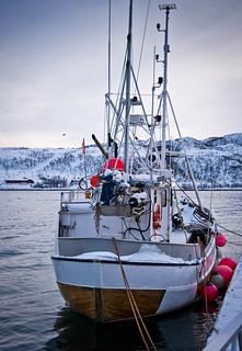 Escorç naval / Timber stern