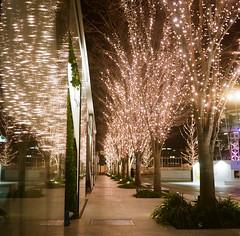 (tsubasabs) Tags: 2019年 6×6 autocordi japan twinlensreflex osaka winter フィルム フィルムカメラ ブローニー 中判 二眼レフ 冬 大阪 日本