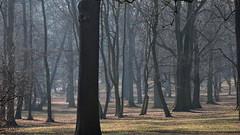 2019-02-16 February in Chateau Garden 2 (beranekp) Tags: czech teplice teplitz tree baum garten garden chateau schloss