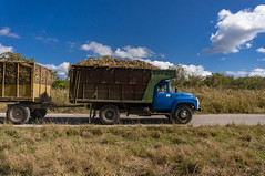 sugar cane trucks on their way to Fe sugarmill (lezumbalaberenjena) Tags: carmita camajuani camajuaní villas villa clara cuba lezumbalaberenjena 2019 battle batalla mambi fuste sabana campamento monument monumento