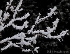 February 22, 2019 - Hoar frost in the morning. (Bill Hutchinson)
