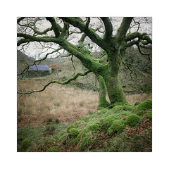 Welsh Woods (gerainte1) Tags: trees woodland woods winter colour film provia100 hasselblad501 snowdonia wales