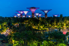 Iron trees (Thanathip Moolvong) Tags: singapore blue hour gardenbythebay shooting photo