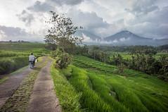 around Jatiluwih (kuuan) Tags: manualfocus mf voigtländer15mm cvf4515mm 15mm bali indonesia sonynex5n riceterace jatiliwuh tabanan view mountbatukaro footpath motorbike