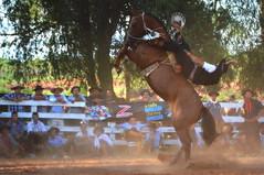 Chupa Carballo (Eduardo Amorim) Tags: gaúcho gaúchos gaucho gauchos cavalos caballos horses chevaux cavalli pferde caballo horse cheval cavallo pferd pampa campanha fronteira quaraí riograndedosul brésil brasil sudamérica südamerika suramérica américadosul southamerica amériquedusud americameridionale américadelsur americadelsud cavalo 馬 حصان 马 лошадь ঘোড়া 말 סוס ม้า häst hest hevonen άλογο brazil eduardoamorim gineteada jineteada