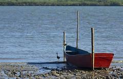 Surpresa! (Márcia Valle) Tags: boats barcos caravelas bahia amoaabahia brasil brazil márciavalle verão summertime sun sol mar sea seascape nikon d5100