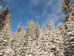 43120206 (roel.ubels) Tags: seefeld tirol innsbruck oostenrijk austria wintersport 2019