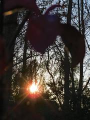 Setting Sun. (dccradio) Tags: lumberton nc northcarolina robesoncounty outdoor outdoors outside nature natural tree trees woods wooded forest sun sunlight sunshine settingsun sunset fadingsun sky branch treebranch treebranches branches treelimb treelimbs silhouette beauty landscape canon powershot elph 520hs march spring springtime fridayfridayevening evening fridaynight