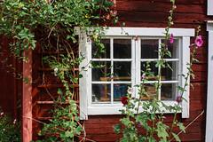 IMG_2915-1 (Andre56154) Tags: schweden sweden sverige eksjö stadt city village haus house holzhaus fenster window blume flower