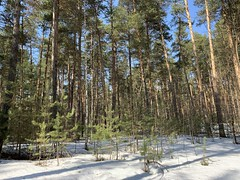 Россия. Урал 2019. Russia. Ural 2019. (svv.david) Tags: россия урал 2019 russia ural forest spring snow heat sunny green pine trees grass ice sky aircraft road