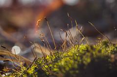 A tranquil oasis (bolex.ua) Tags: macro spring april moss green light rays forest nature kiev kyiv ukraine plants inthegreen мох весна апрель киев украина лес природа макро макрокольца лучи гелиос442 helios442 oldoptics старыеобъективы nikon nikond5300