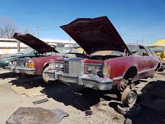 1977 Mercury Cougar (dave_7) Tags: 1977 mercury cougar classic car 70s junkyard scrapyard