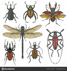 Vector set of various insects in hand drawn style (janinaewals) Tags: set insect beetle dragonfly bug stagbeetle mite longhornbeetle dungbeetle drawn hand abstract animal art arthropod biology cartoon cockroach collection colored decoration decorative detailed doodle draw drawing element fly graphic icon illustration isolated little macro nature pest realistic retro sketch sting summer symbol vintage wild wildlife wing tickbite fauna longhorned entomology