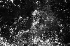 Nara (#argentic #35mm #noadjustments) Tags: japan nara roadtrip 35mm canon af35 analog film naturephotography noadjustments blackandwhite
