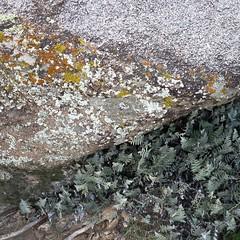 Mineralienverwertungsanlage / Mouldy Boulder (bartholmy) Tags: arizona az tortolita fels boulder flechte lichen fern rock minimal minimalism minimalismus minimalistisch abstrakt abstract