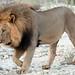 Mosetlha, Madikwe Game Reserve, South Africa