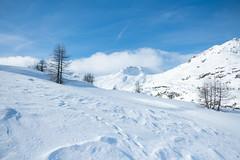 Simplonpass_26. Januar 2018-3 (silvio.burgener) Tags: simplonpass simplon switzerland adler schweiz swiss svizzera suisse hospiz sempione steinadler