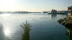 Bostanci port (zenziyan) Tags: pier port marine seabird seaside istanbul bay shore seagull liman sahil bostanci sun ship stone boat yacht moss