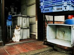 neko-neko2352 (kuro-gin) Tags: cat cats animal japan snap street straycat 猫