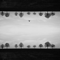 Falling is allowed; to get up is ordered Russian proverb (Fan.D & Dav.C Photgraphy) Tags: dawn silhouette sky cloud dramatic backlit moody sun fog mountain morning dusk clouds tree beautiful trees black white artstyle mirror imagine ordinary