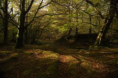 Autumn Silence (Benjamin Driver) Tags: light wood woods woodland forest tree trees leaves autumn autumnal warm sun sunlight shadows shadow dark darkness orange green cumbria lakedistrict lake district
