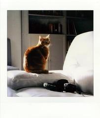 110319001 (francescoccia) Tags: sq10 redcat cat square squareformat instax fuji fujifilm instant color francescoccia analog analogue