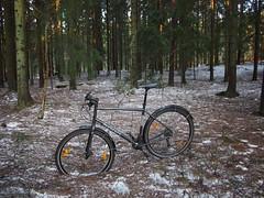 2019 Bike 180: Day 56, March 21 (olmofin) Tags: 2019bike180 finland bicycle polkupyörä metsä forest lumi snow kuusi spruce needls