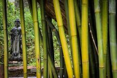 """""""Amanhã ou a próxima vida - o que vem primeiro, nunca se sabe"""". (Insta @7_dede / @seorientasp) Tags: buda budismo buddhism buddha buddhist buddhisttemple brazilian buddhistmonk budista book bagagem foto fotododia freedon filosofia fotojornalismo fotografia photography photographer trave travel traveling trip vibes meditar meditação karma dharma sangha carma universo zen zazen"""