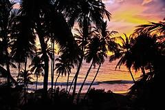 Holiday dreams (Zoom58.9) Tags: palms trees shadow sky clouds beach ocean sea water mood asia srilanka ambalangoda landscape nature palmen bäume schatten himmel wolken strand meer ozean wasser stimmung asien forest wald canon eos 50d landschaft natur sunset sonnenuntergang sun sonne sonnenschein sunshine