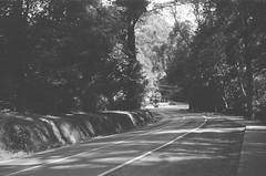Mount Dandenong Tourist Road (2) (Matthew Paul Argall) Tags: spartus35fmodel400 35mmfilm blackandwhite blackandwhitefilm 100isofilm kentmerepan100 road street mountdandenongtouristroad