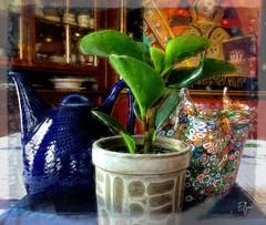 a study in stillness (ellynwriting - slowmode) Tags: stilllife succulent muranoglass millefiori swedishteapot plantpot handblown чательно