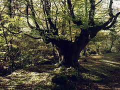 CAGIGA (agustincordoba_g) Tags: otoño paisaje arboles arte agustin ucieda cantabria bosque