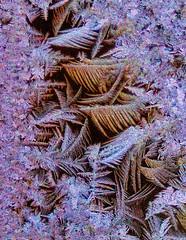 All That Glitters Isn't Gold (edmason88) Tags: cold ice crystals tamron90mmmacro alberta canada