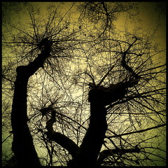 treetops (luci_smid) Tags: trees branches treetops shapes pattern silhouettes contours impression monochrome