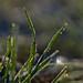 Green Grass in Winter Sun