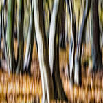 Autumn Woodland by Martin Parratt