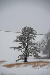 quabbinreservoir2019-98 (gtxjimmy) Tags: nikond7500 nikon d7500 winter snow quabbinreservoir swiftriver ware belchertown massachusetts watersupply newengland quabbin