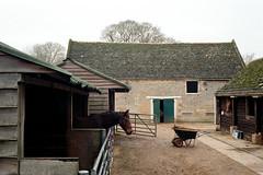 Sacrewell horses (tercrossman87) Tags: canon 7 fujifilm fuji superia 400 film plustek 8200i voigtlander 35mm 17 ultron