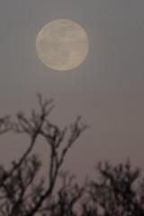 Spring Supermoon,Aberdeen_Mar 19_399 (Alan Longmuir.) Tags: grampian aberdeen misc sky moon springsupermoon